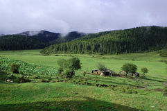 зеленый лужок Стоковые Фотографии RF
