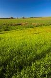 зеленый лужок Стоковое Изображение RF