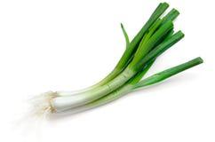 Зеленый лук Стоковая Фотография RF