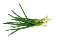 зеленый лук стоковое изображение