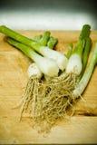зеленый лук стоковая фотография