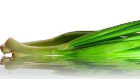 зеленый лук Стоковое Изображение RF