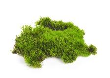 Зеленый мох изолированный на белом bakground стоковые фотографии rf