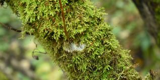 Зеленый мох на вале Биология и заводы в лесе стоковое фото rf