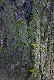 Зеленый мох на предпосылке дерева grunge стоковое фото