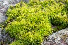 Зеленый мох на сером утесе стоковое фото rf
