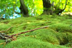 Зеленый мох на том основании стоковые фотографии rf