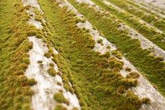 Зеленый мох на шифере Крупный план мха стоковое фото