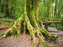 зеленый мох Стоковое Изображение RF