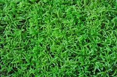 зеленый мох Стоковые Фото