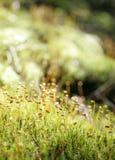 зеленый мох Стоковые Фотографии RF