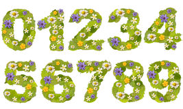 зеленый номер листьев Стоковые Изображения