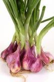 Зеленый овощ шалота Стоковая Фотография RF