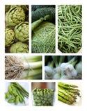 зеленый овощ Стоковые Фото