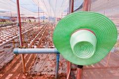 зеленый овощ hydroponics шлема Стоковая Фотография