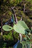 Зеленый одичалый кактус на предпосылке живописного ландшафта стоковая фотография rf