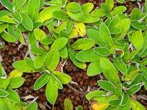 зеленый орнамент Стоковое Изображение
