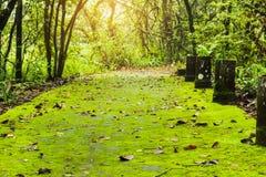 Зеленый папоротник стоковое изображение