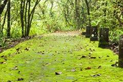 Зеленый папоротник стоковое фото rf