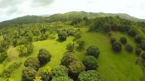 Зеленый парк в полях острова Bohol с сферически деревьями philippines сток-видео