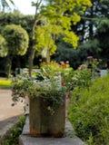 зеленый парк в солнечном дне стоковое фото rf