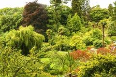 Зеленый парк города с деревьями Красивейший ландшафт лета Стоковая Фотография
