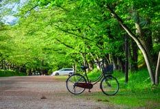 Зеленый парк на лете Стоковые Фото