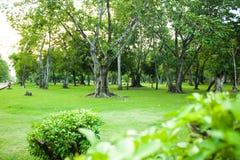 Зеленый парк сада с деревом в утре лета Стоковые Изображения