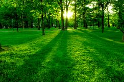 зеленый парк Стоковая Фотография