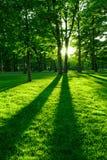 зеленый парк Стоковые Изображения