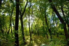 зеленый парк стоковые фотографии rf
