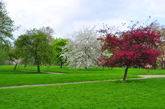 зеленый парк london стоковые изображения