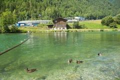зеленый пейзаж природы ландшафта озера Стоковое Изображение RF