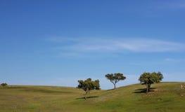 зеленый пейзаж Стоковое фото RF