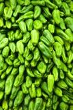 зеленый перец стоковое фото rf