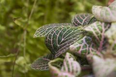 зеленый пинк листьев стоковая фотография rf