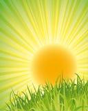 зеленый плакат природы Стоковая Фотография RF