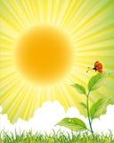 зеленый плакат природы Стоковое Изображение