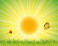 зеленый плакат природы Стоковая Фотография