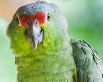Зеленый попыгай стоковая фотография