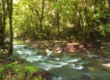 Зеленый поток Стоковое Изображение