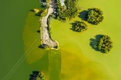Зеленый пруд воды стоковые фотографии rf