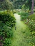 зеленый пруд стоковые изображения rf