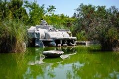 зеленый пруд Стоковая Фотография