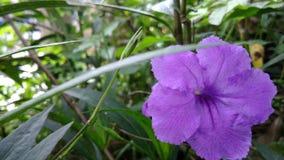 зеленый пурпур стоковое фото