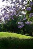 зеленый пурпур Стоковые Фотографии RF