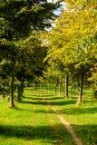 Зеленый путь деревьями через поля Стоковые Фото