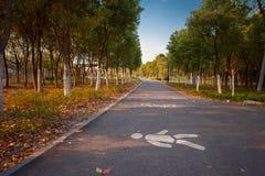 Зеленый путь на юге  фарфора Стоковое фото RF