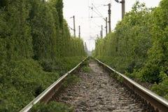 Зеленый путь Стоковая Фотография