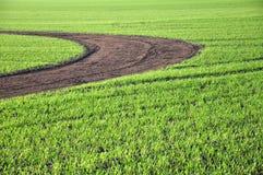 зеленый путь Стоковое фото RF
